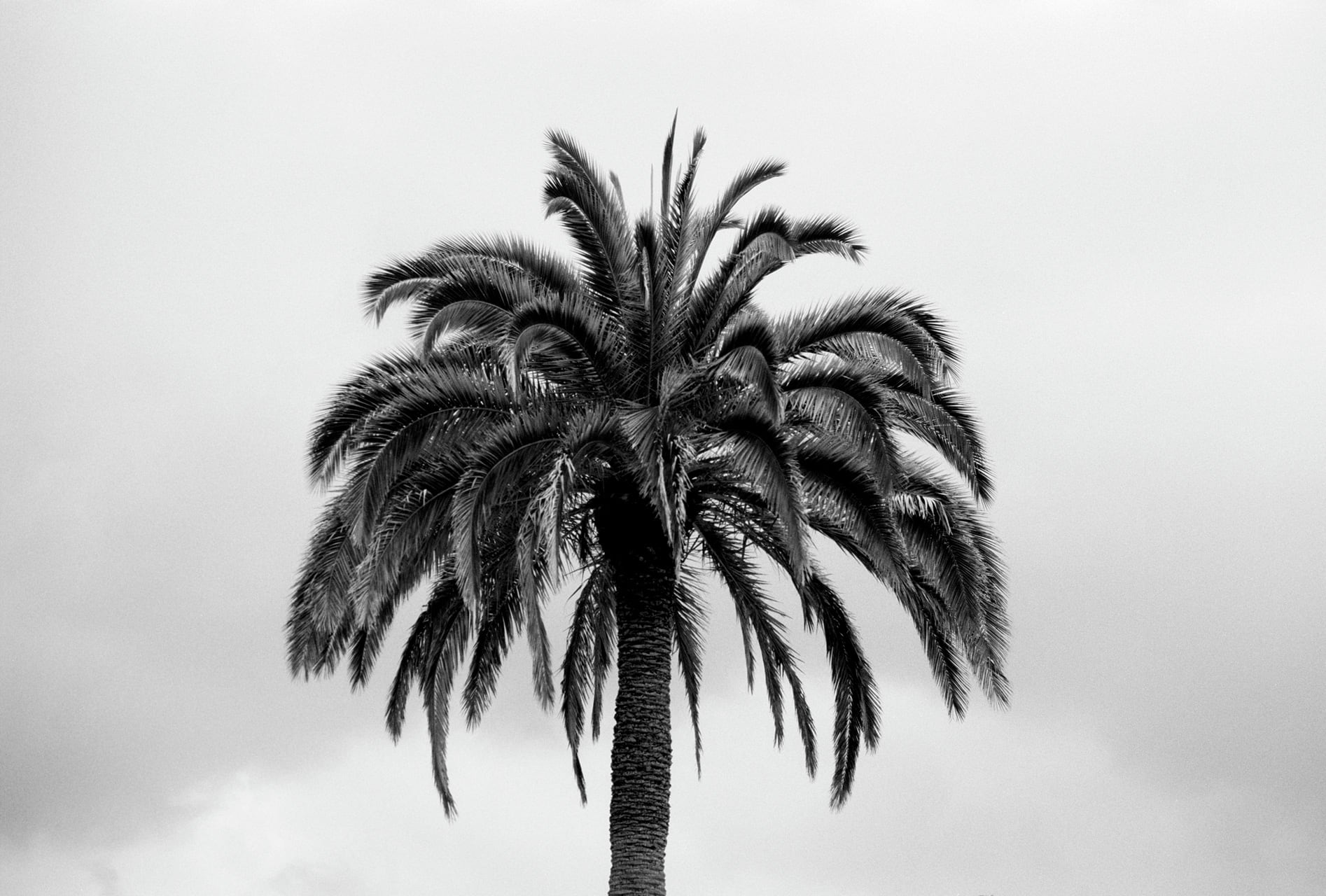 Palm Tree, by Julian Mullan