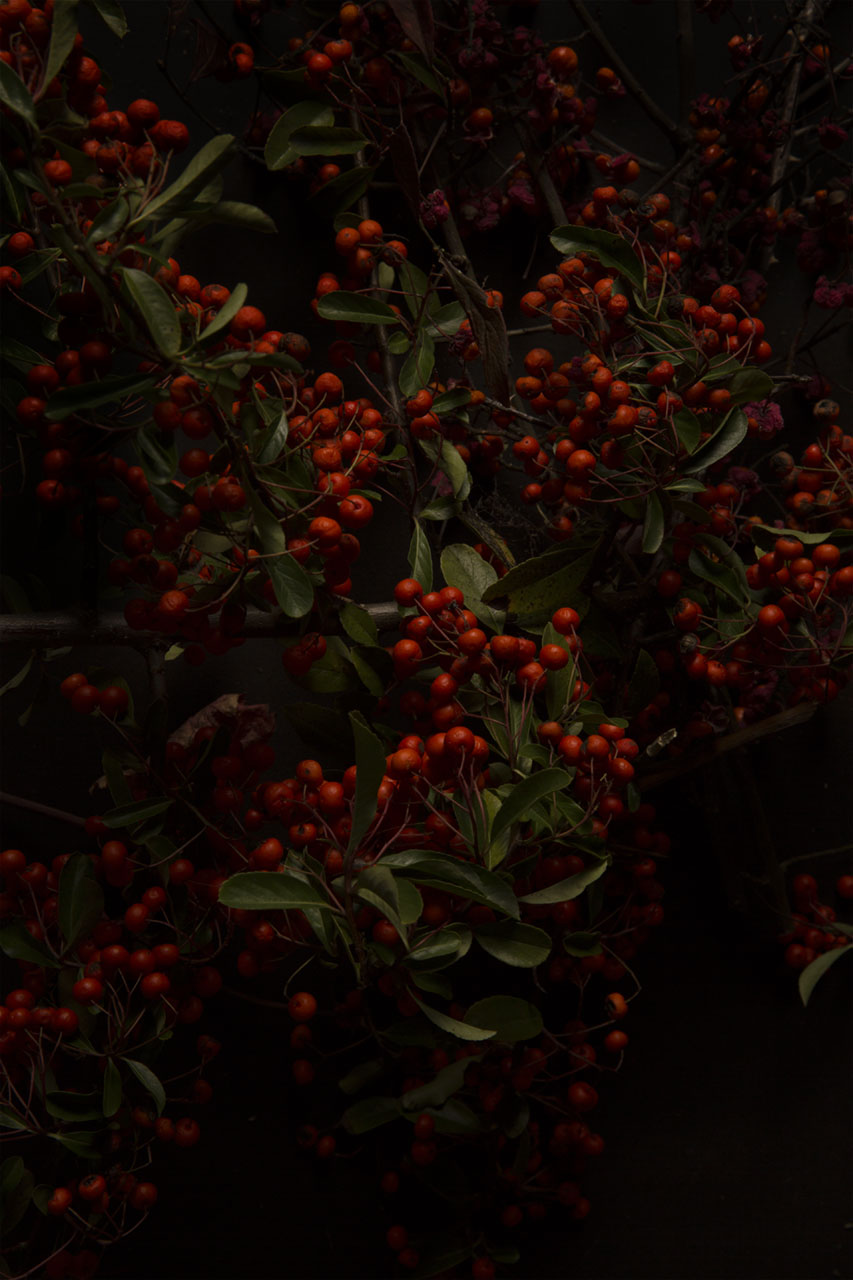 Red berries, by Julian Mullan