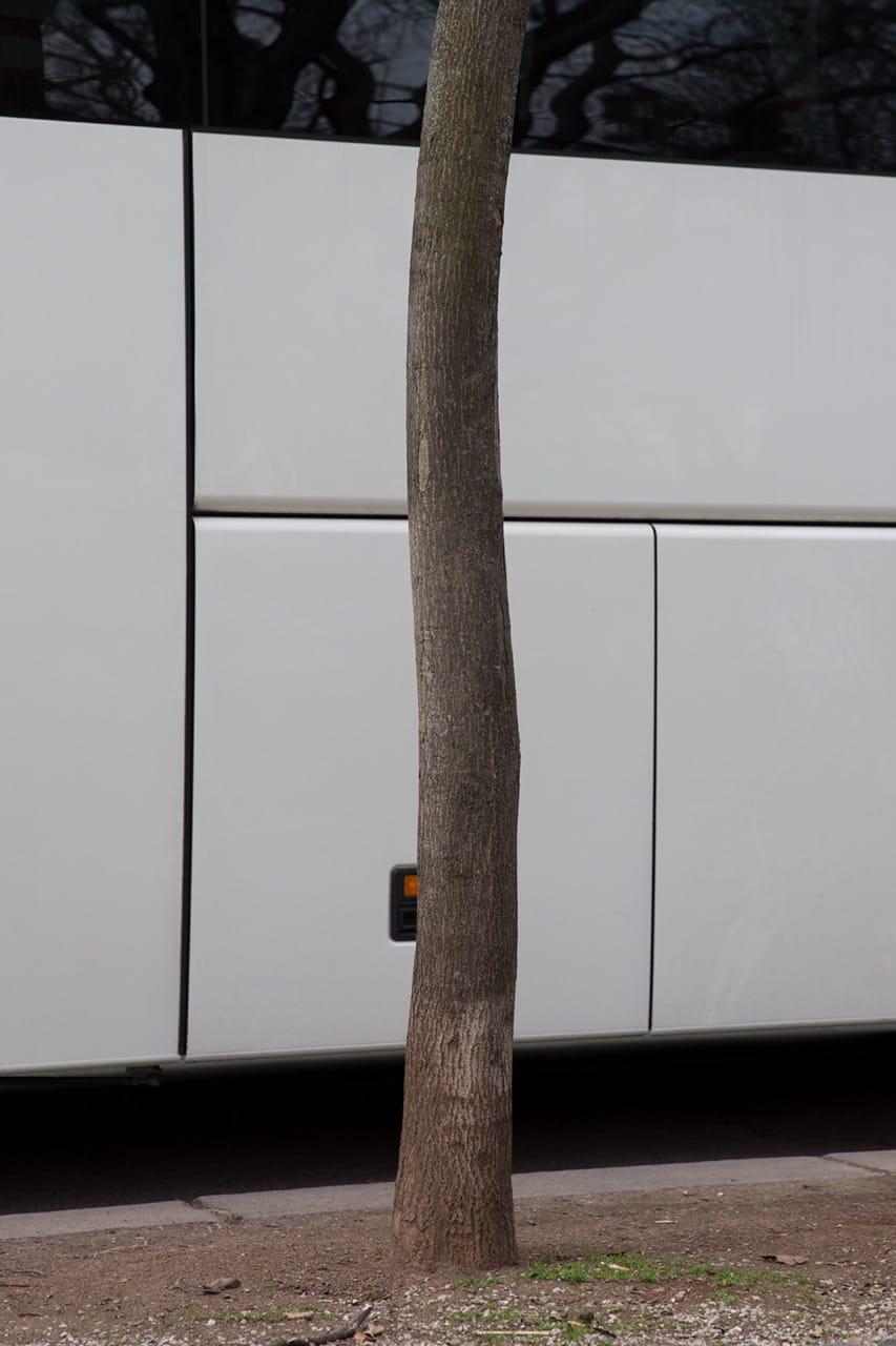 Julian Mullan, Die Stadt, Baum und Bus