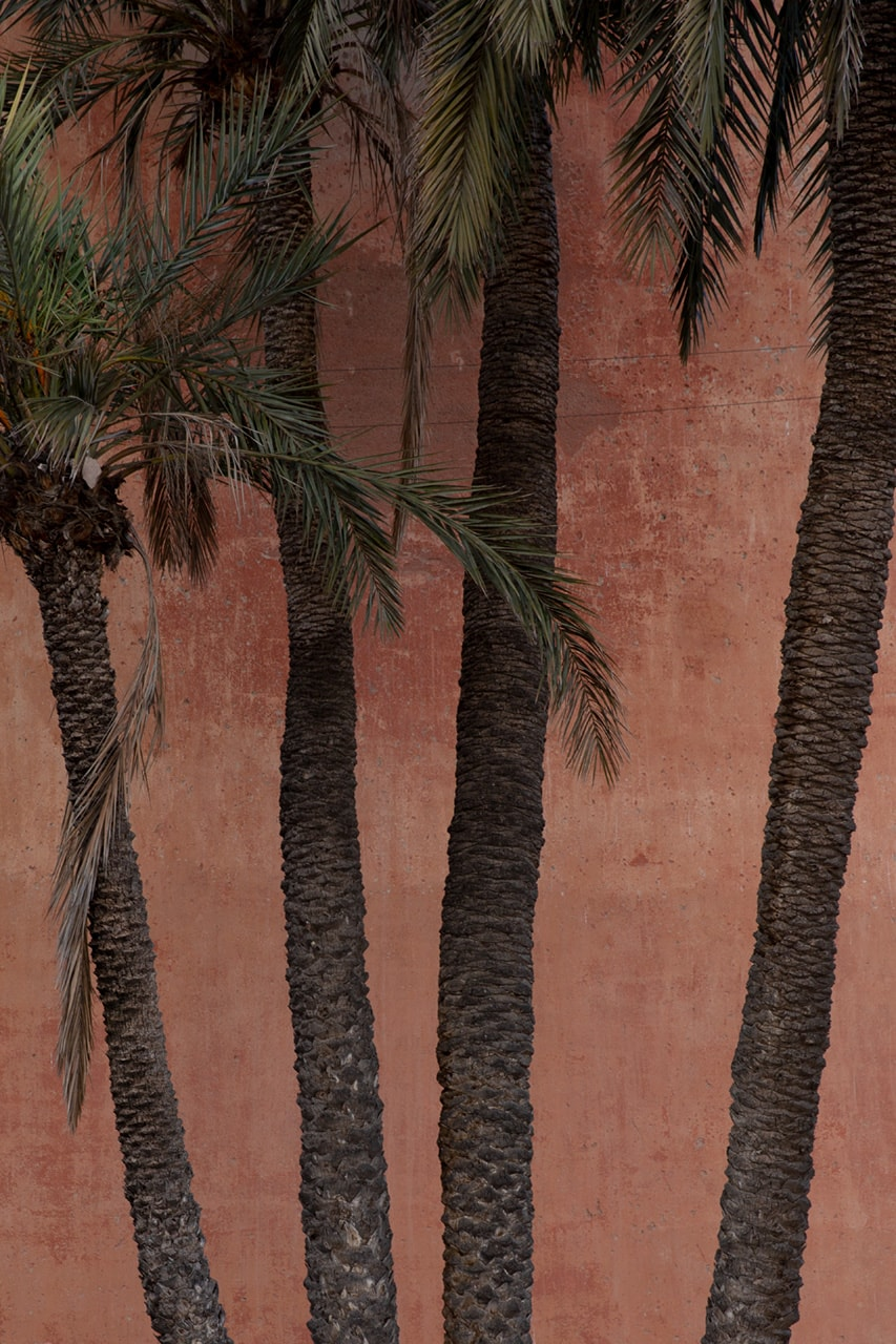 Julian Mullan, Morocco, Palm Trees (2902)