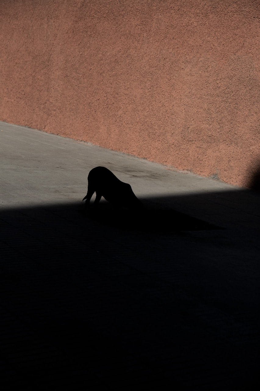 Julian Mullan, Morocco, Dog
